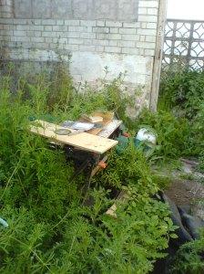Greenhouse Jungle
